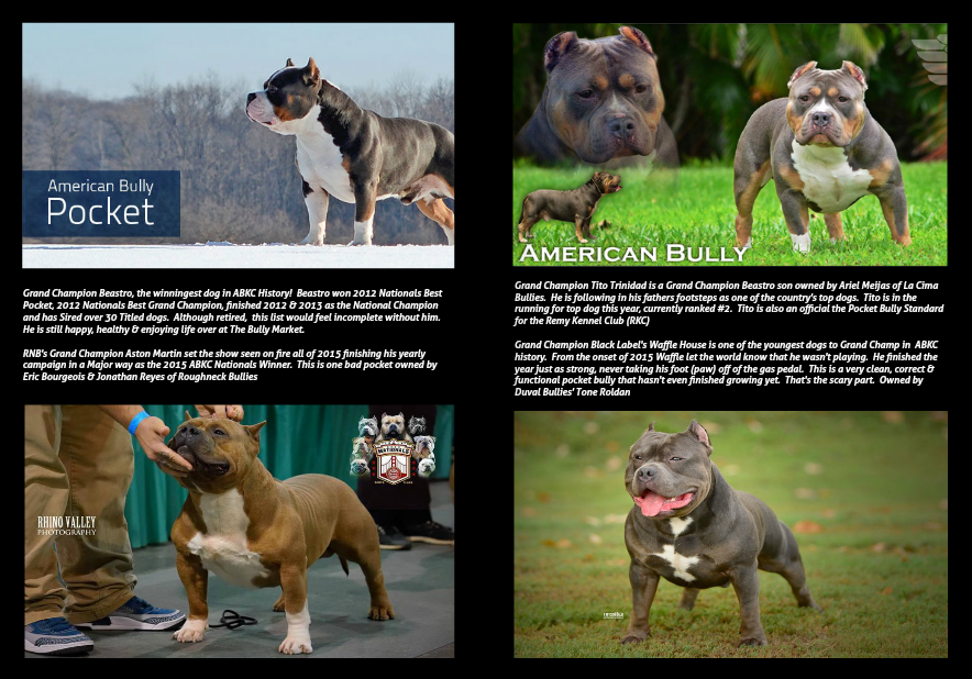 The Top 18 Pocket Bullies | BULLY KING Magazine